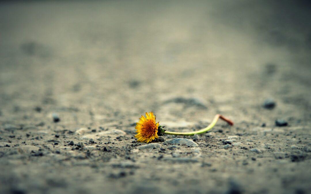 Kako preživeti gubitak voljene osobe – uloga porodice